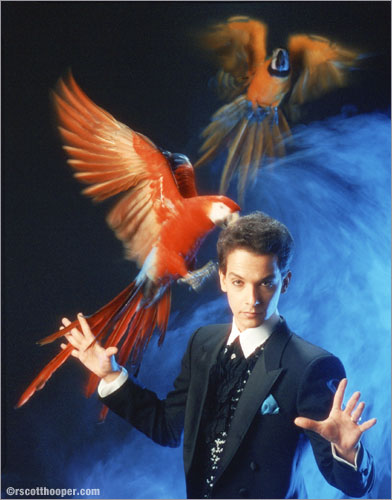 Photo of magician Joseph Gabriel with flying McCaws