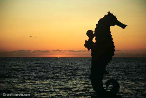 Photo of seashorse sculpture on beach in Puerta Vallarta