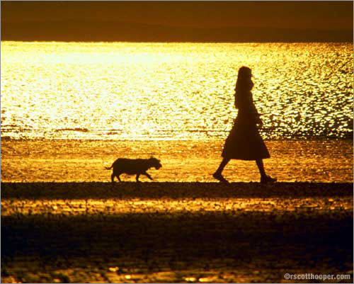 Photo of woman and dog at sunset on the beach